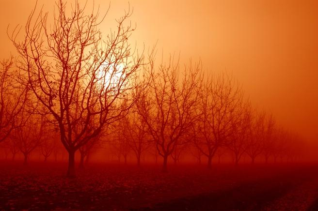 orange sunrise behind walnut trees