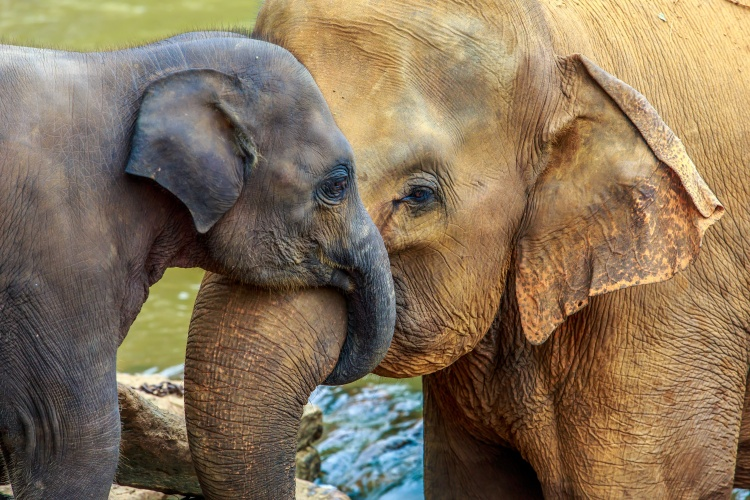 elephant and baby elephant