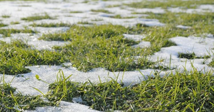 冬 草 雪 素材